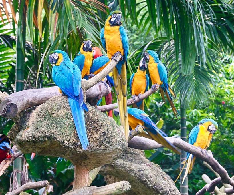 bird-park